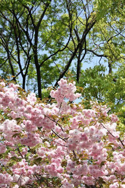 桜_09_06