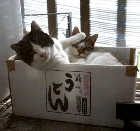 2012年1/19の午前中の猫
