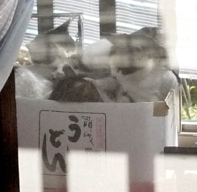 すし酢目猫