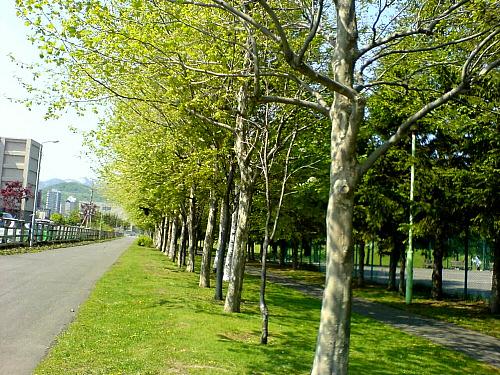 公園並木道