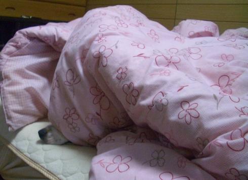 080520 ベッド