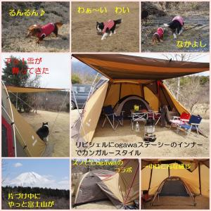 cats_20120410220341.jpg