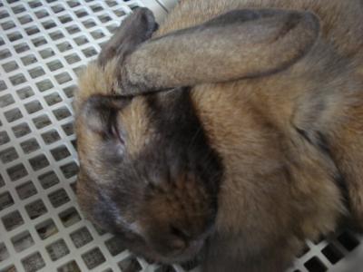迫力の寝顔