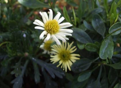 かわいい花090214