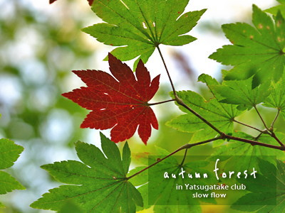 0810yatsugatakeclub10