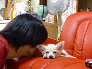 DOGアイドル