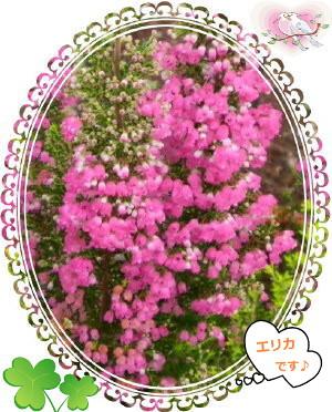 花ブ97-5
