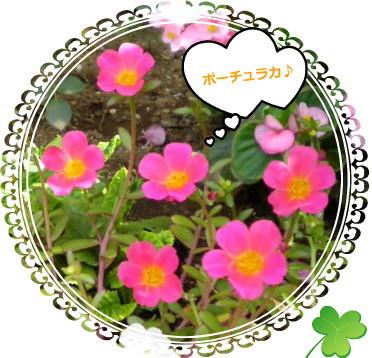 花ブ915-5