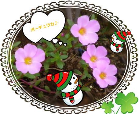 花ブ923-5
