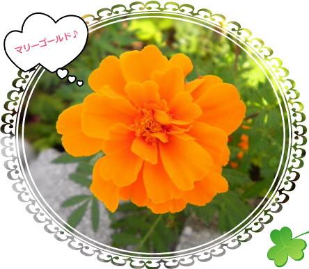 花ブ101-3