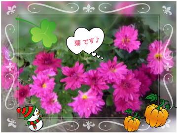 花ブ1028-4