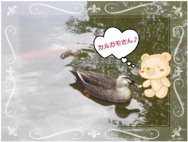 花ブ113-3