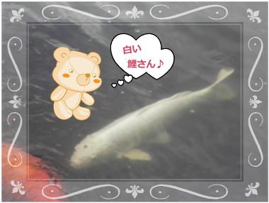 花ブ113-5