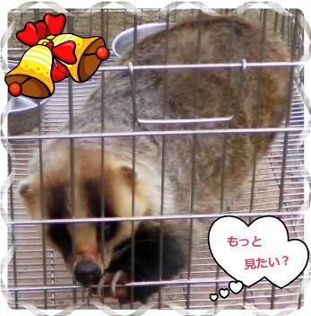 花ブ118-3