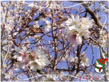 花ブ118-4