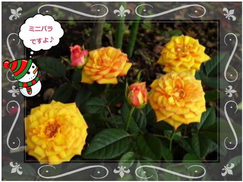 花ブ1124-6