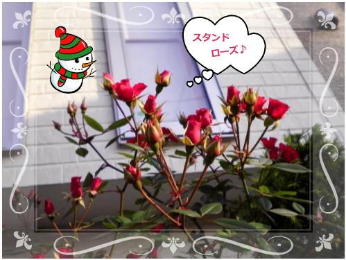 花ブ1219-7