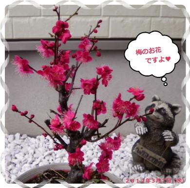花ブ201239-13