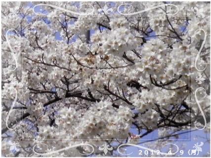 花ブ201249-11