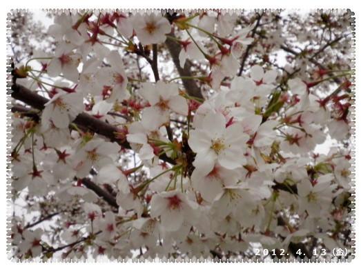 花ブ2012413-5
