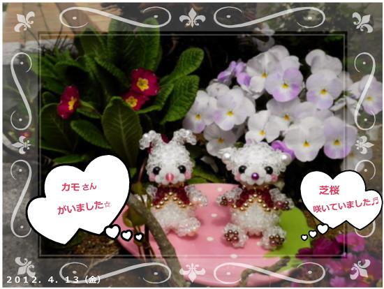 花ブ2012413-2