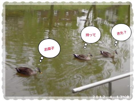 花ブ2012413-6