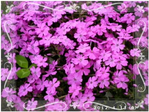 花ブ2012413-7