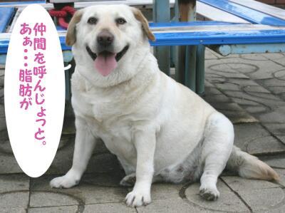 012-san-purin-12-h.jpg