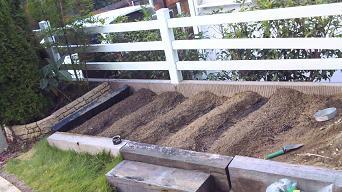 2010年キイロスズメ蜂