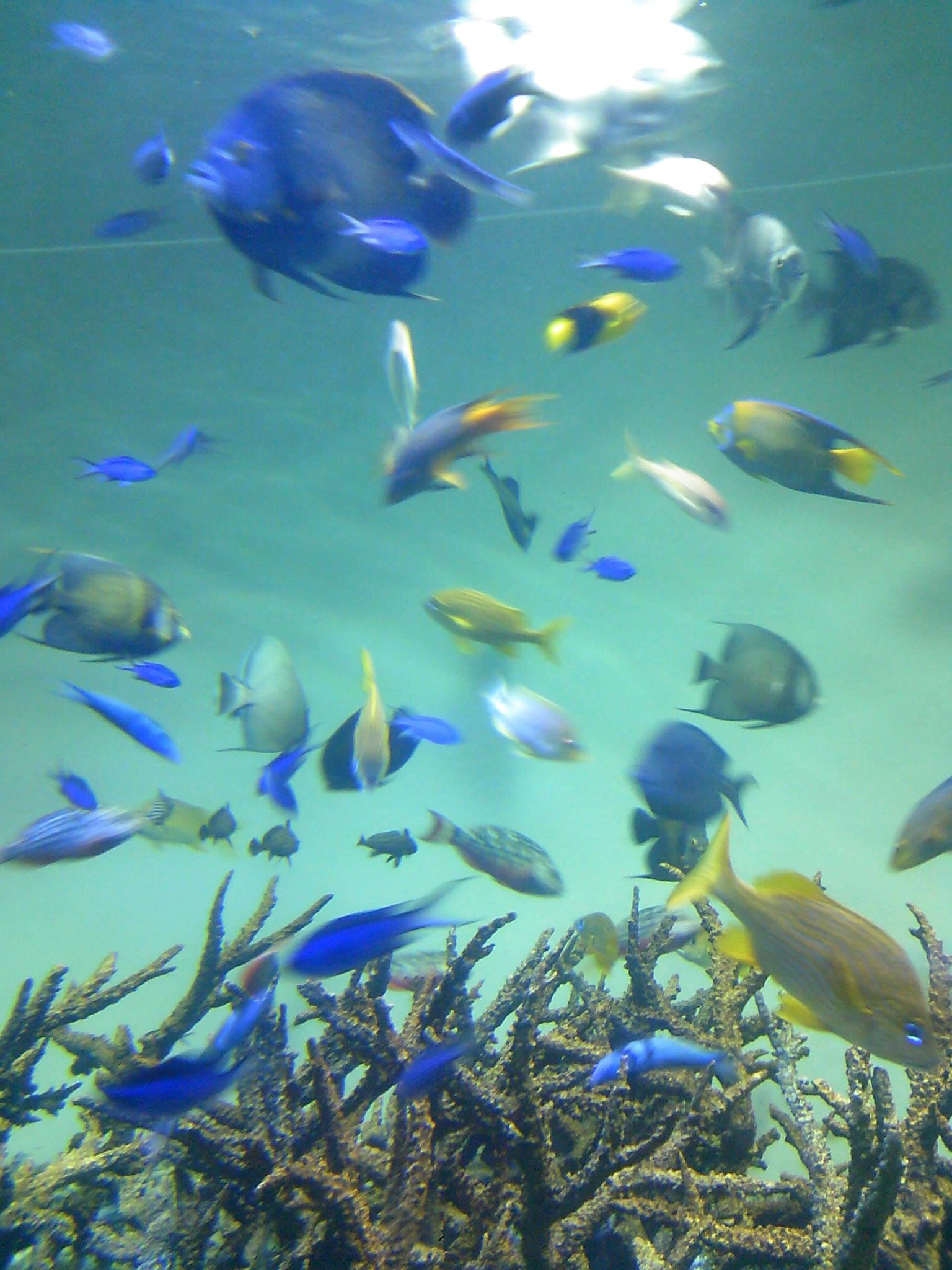 CAYBYRTI オーソドックスな熱帯魚でつ