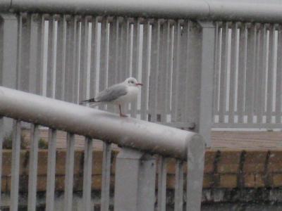 自治体セミナー⑥ 凍える鳥