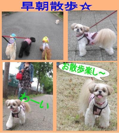 2011.9.4早朝散歩