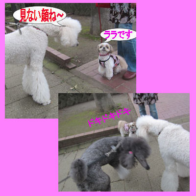 2011.9.4スタンプーちゃん