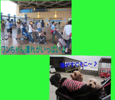 2011.9.4わんちゃんいっぱい