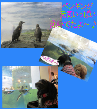 2011.9.4ぺんぎんさん