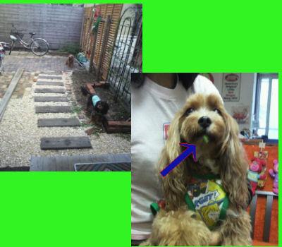 2011.10.8お庭遊び