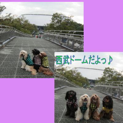 2011.10.9どーむ