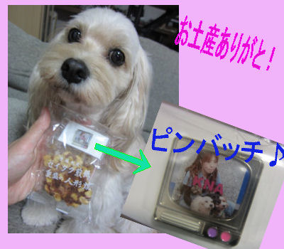 2011.10.16お土産~
