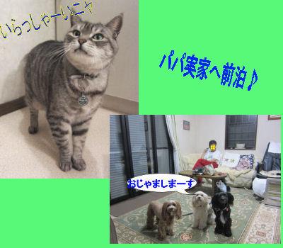 2011.11.5パパ実家