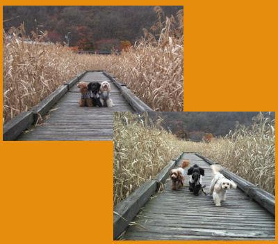 2011.11.6お散歩