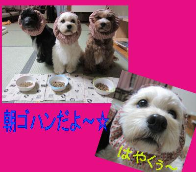 2011.11.7チビ朝ごはん