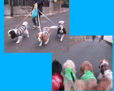 2011.12.25散歩