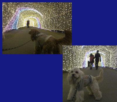 2012.1.15光のトンネル~