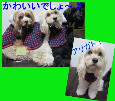 2012.1.17コニレノアンちゃんありがとう