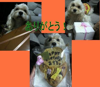 2012.1.17モコちゃんありがとう