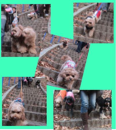 2012.1.28階段