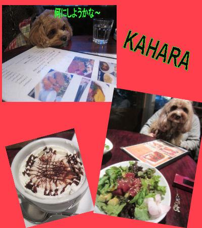 2012.1.28KAHARA