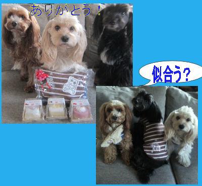 2012.2.12お洋服