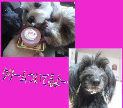 2012.2.12くりーむ