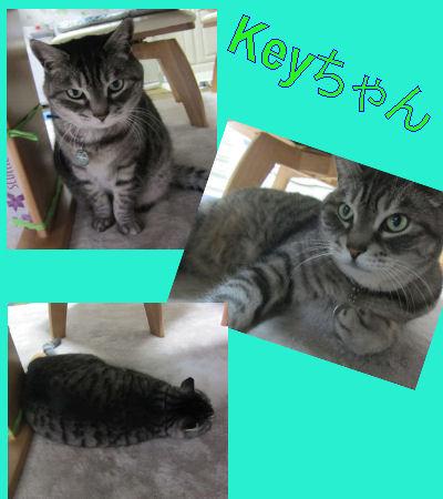 2012.2.26Keyちゃん